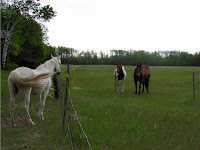 Horses in Adjacent Pastures Shouldn't be able to Touch Noses