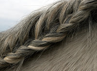 French-Braided Horse Mane (also 'Running Braid')