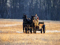 Two-Horse Percheron Hitch