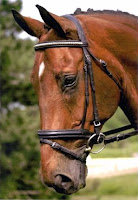 Flash Cavesson Image from: http://www.ridgemountsaddlery.com/Ridgemount_Bridlework.asp