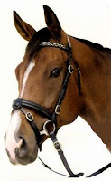 Hanoverian Noseband Image from: http://www.okcorral.co.nz/englishbridles.htm
