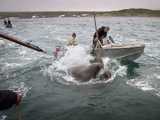 охота на китов.Чукотка.Лорино