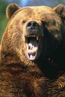 рыбалка-Чукотка-и-медведь