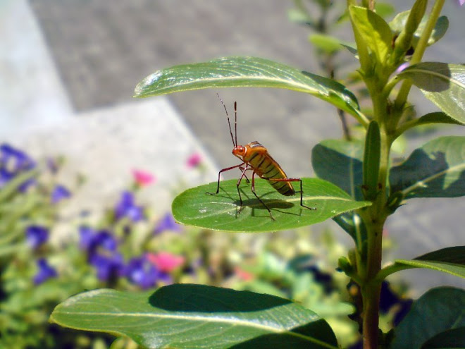 Vida de inseto, rs...