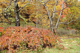 Mill Creek Innblog: Week 6: North Carolina Mountains Fall Color Report