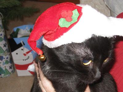 Cat Santa Outfit Gif