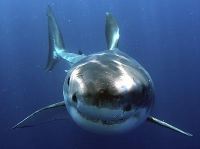 С детства очень боюсь большую белую акулу, и фильмы сдесь не причём...