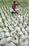 The Plight of Indian Farmers