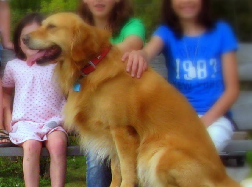 A Dog S Purpose Belker