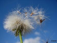 A favor do vento