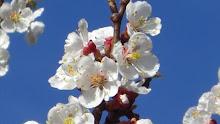 evviva la primavera!!!!