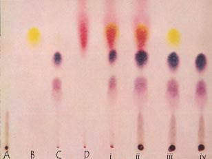 drugs screen using thin layer chromatography 1 medicina (kaunas) 200339 suppl 2:132-6 [identification of the drugs in the mixture using thin-layer chromatography in sudden poisoning cases.