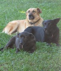 Teddie, Mickey & Betty