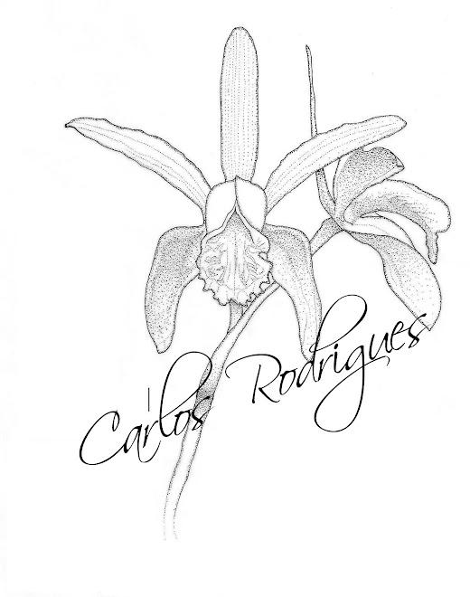 Orquídea 01