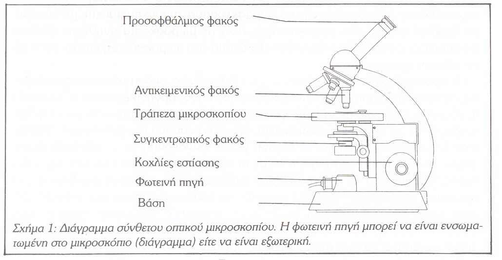 Oπτικό Μικροσκόπιο (Optical Microscope) %CE%9C%CE%99%CE%9A%CE%A1%CE%9F%CE%A3%CE%9A%CE%9F%CE%A0%CE%99%CE%9F