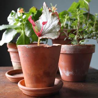 tumbuhan