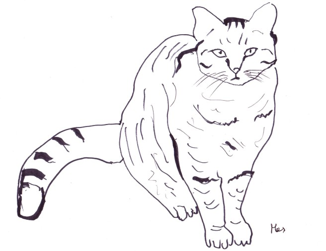 Stampa e colora gatto - Gatto disegno modello di gatto ...