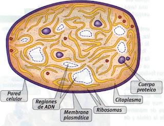biologia TEORIA CELULAR