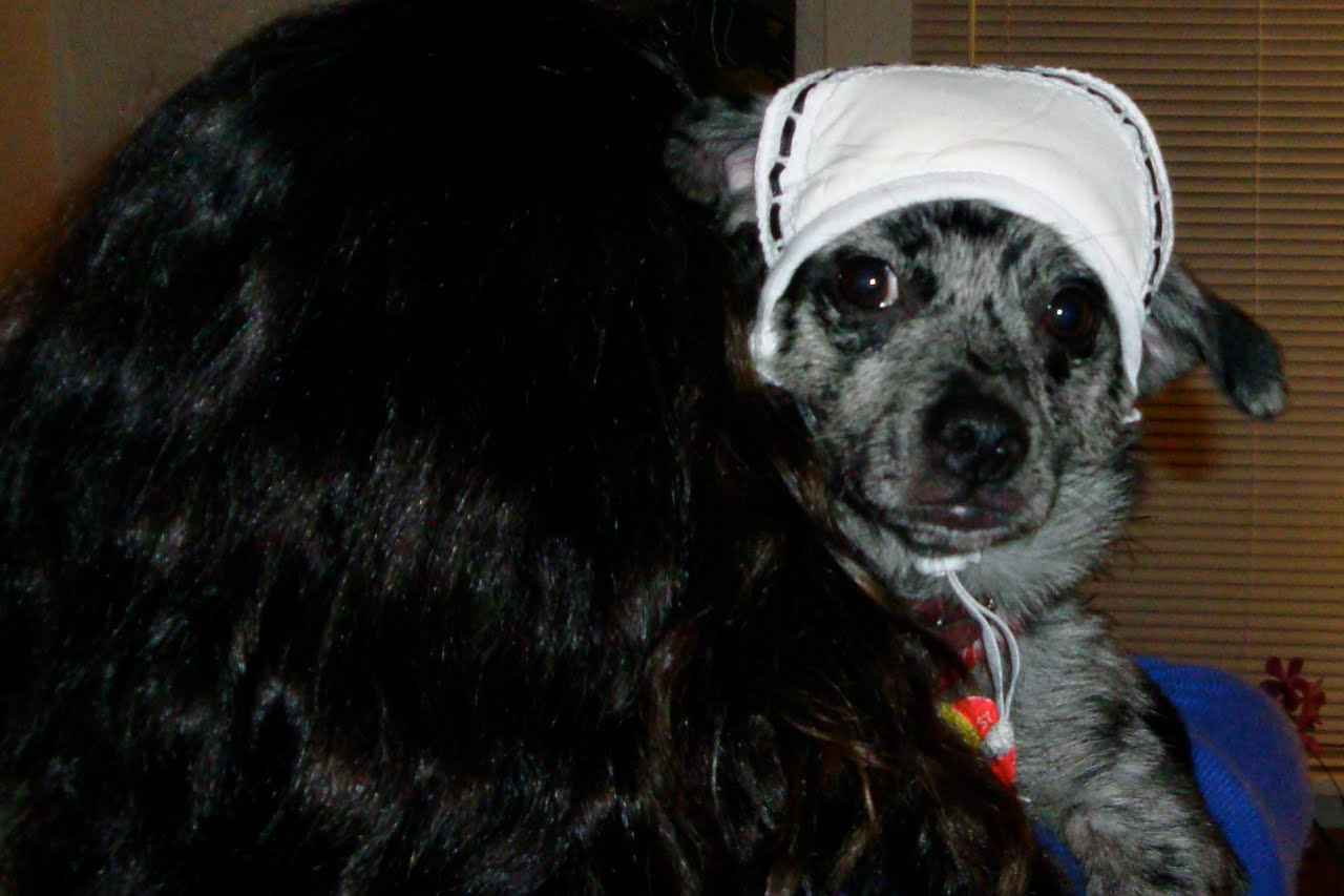 dog wearing french maid hat