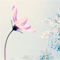 ' primavera soprando prum caminho mais feliz '