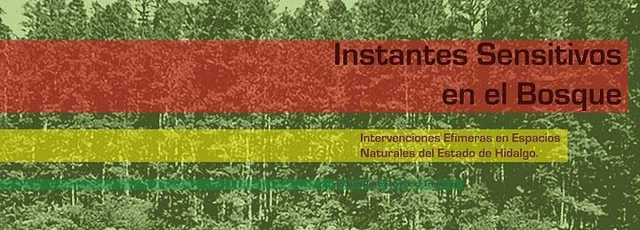 Instantes Sensitivos en el Bosque