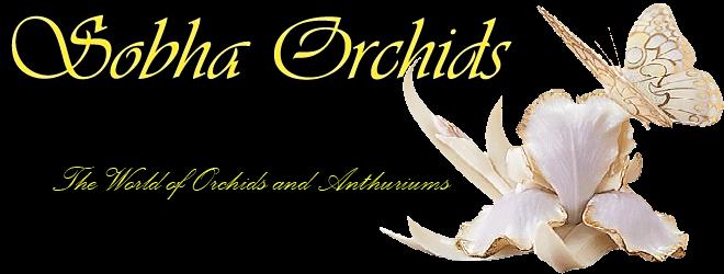 Sobha Orchids