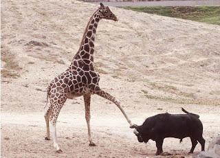 Imagen de una girafa
