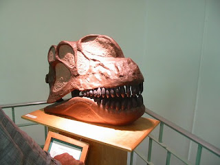 Wyoming Geology Museum wrong head apaposaurus