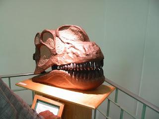 Wyoming Geology Museum wrong head apaposaurus