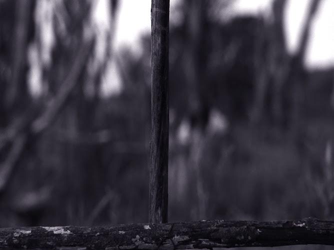 tragédia do tamanduá