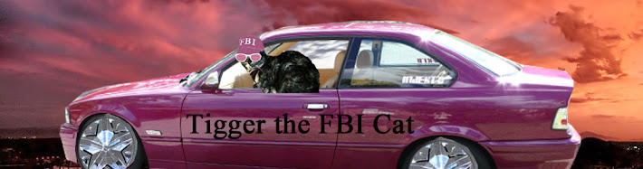 Tigger the FBI Cat