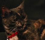 Tigger the F.B.I. Cat