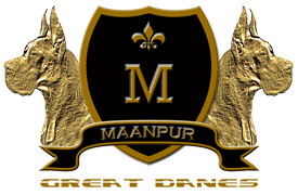 Maanpur Great Danes