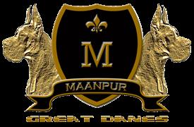 Maanpur Great Danes