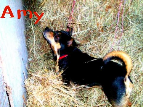 Amy - mutt