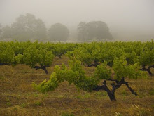 Vineyard after Summer rain  2007