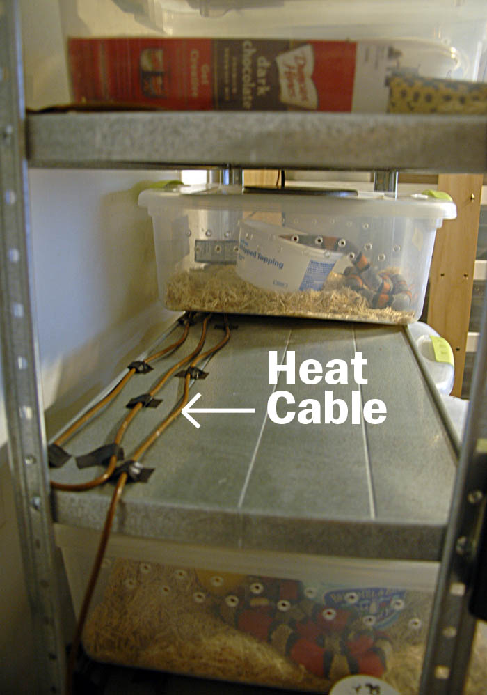 Heat Cable For Reptiles : The snake rack zoomed repti heat cable