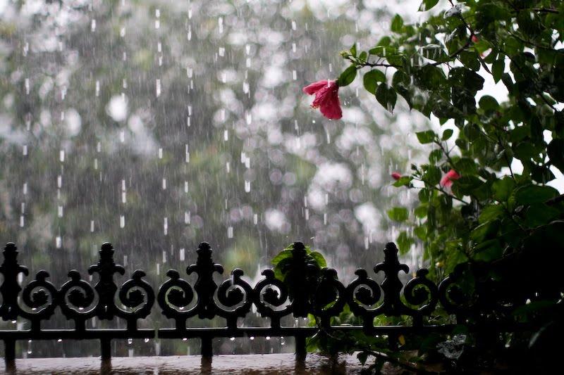 Kisa - Page 2 Rainy+Season+in+Kerala