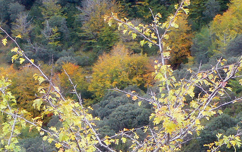 colors of autumn colores otoño tardor yellow groc amarillo marron arboles arbres bosc bosque forest trees