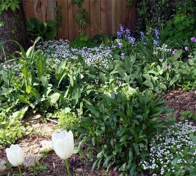 late spring bloom