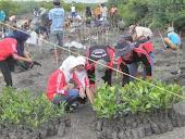 Kegiatan Penanaman 1000 mangrove di Bedul, Resort Grajagan  Taman Nasional Alas Purwo