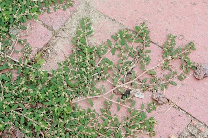 how to kill weeds on bricks bunnings