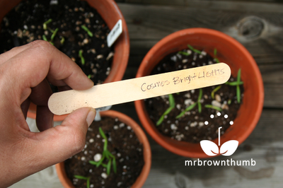 Homemade plant labels from popsicle sticks