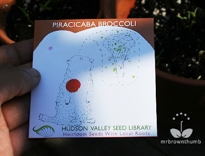 Piracicaba broccoli Hudson Valley Seed Library