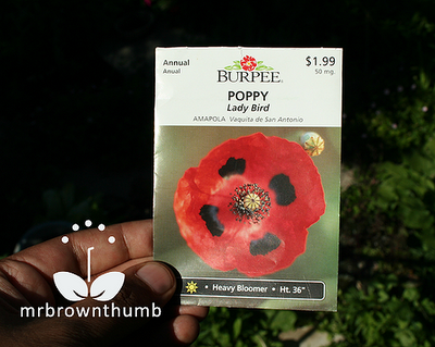 Ladybird poppy seed pack from Burpee seeds