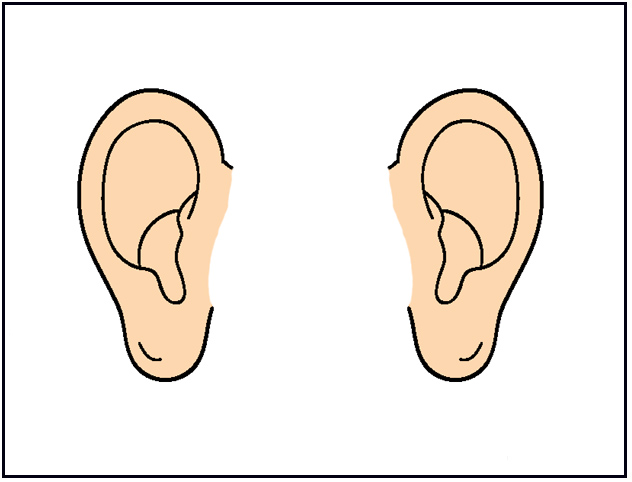 Ear Clipart For Kids Parts of the head flashcards
