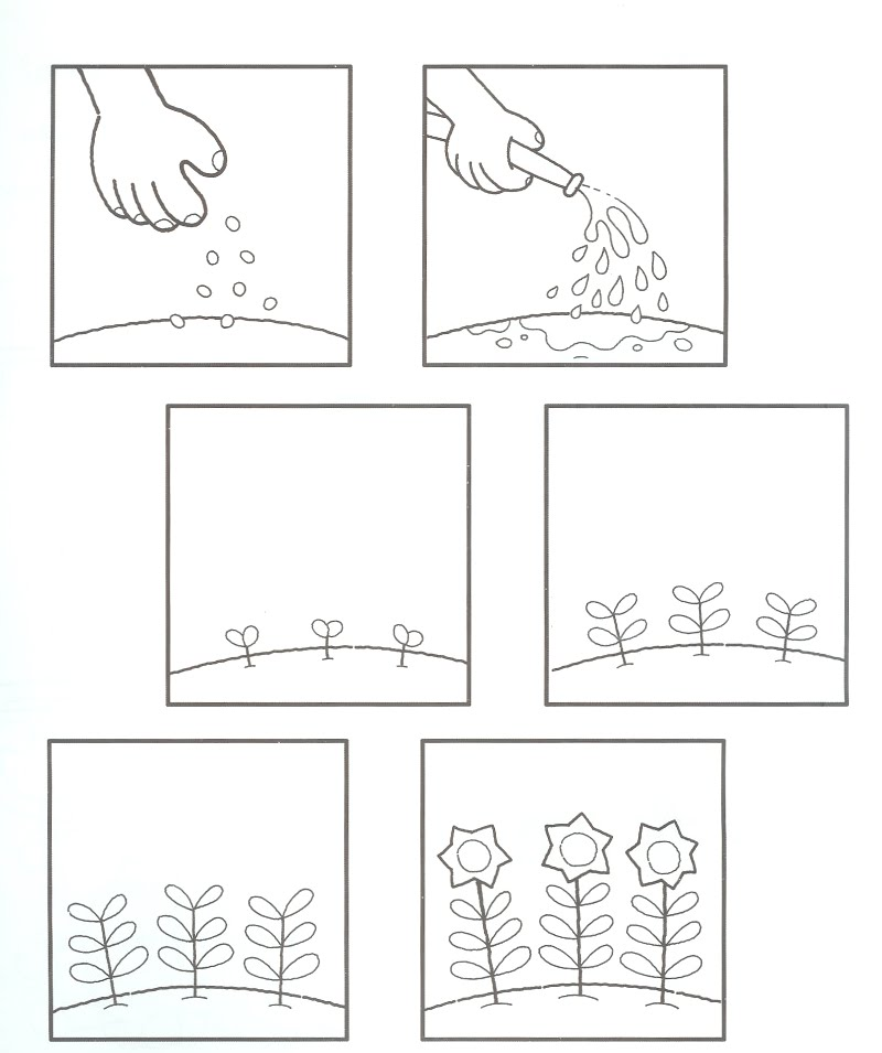 Life Cycle Of A Plant Worksheet For Kindergarten 1st grade – Kindergarten Plant Worksheets