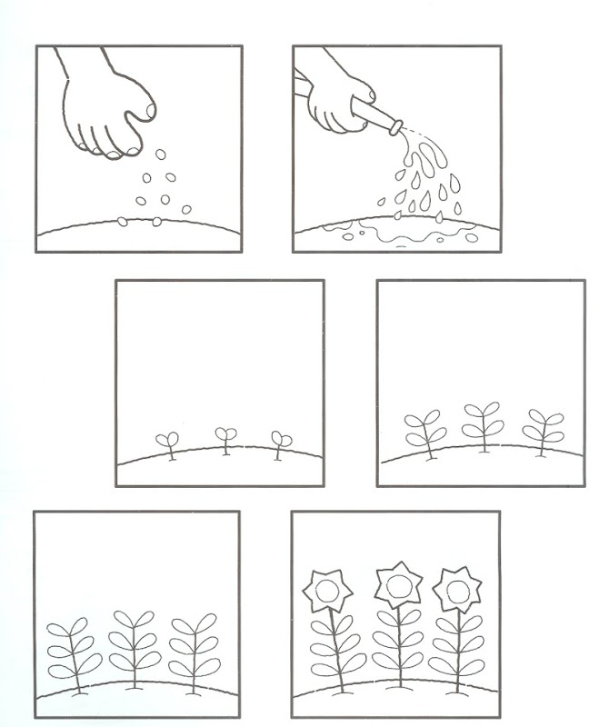 flower coloring pages for adults. Plant Parts Coloring Sheets title=