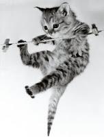 I ♥ Kittens