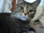 My snuggly kitty Sasha
